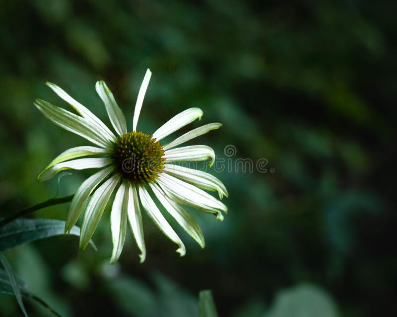 Fiore verde immagini stock libere da diritti