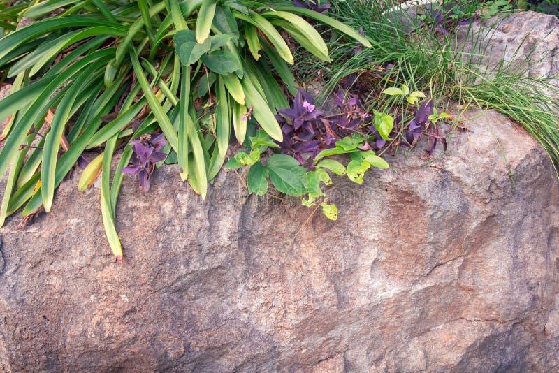 Fiore verde della natura su fondo di pietra in giardino fotografia stock libera da diritti