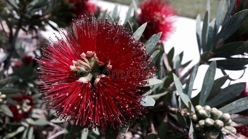 Fiore vibrante fotografie stock libere da diritti