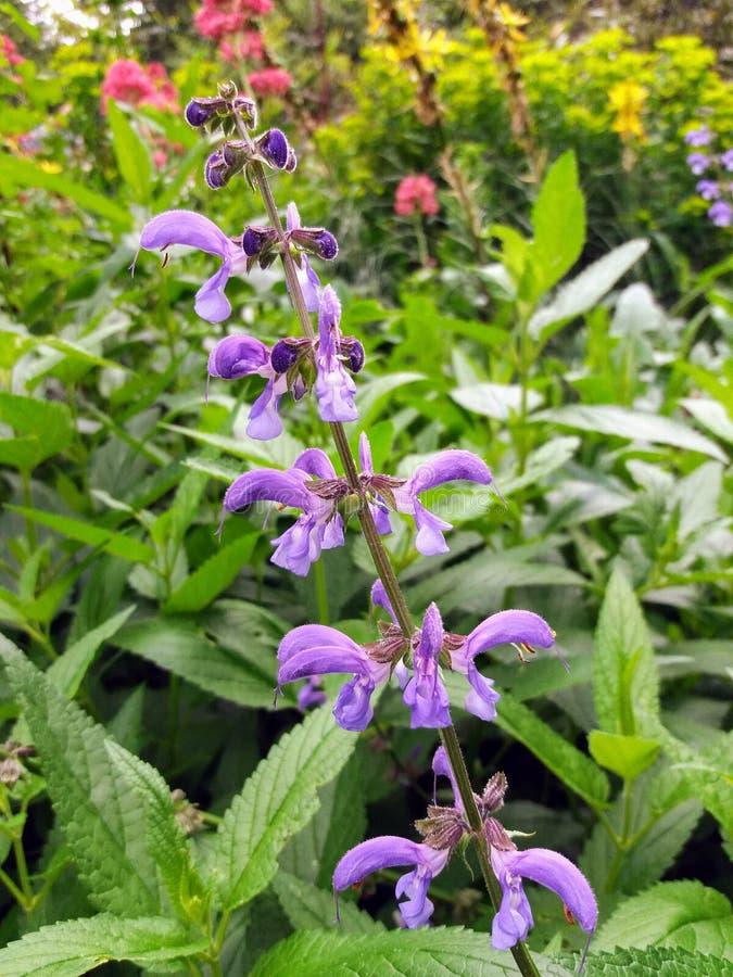 Download Fiore viola immagine stock. Immagine di viola, fiore - 117981215
