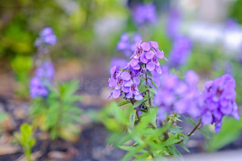 Fiore viola con fondo vago fotografie stock libere da diritti