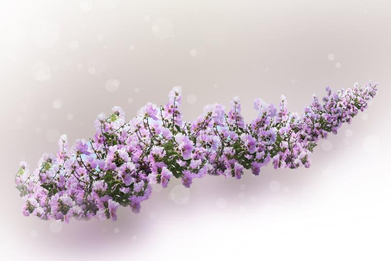 Fiore viola nel sogno fotografia stock libera da diritti