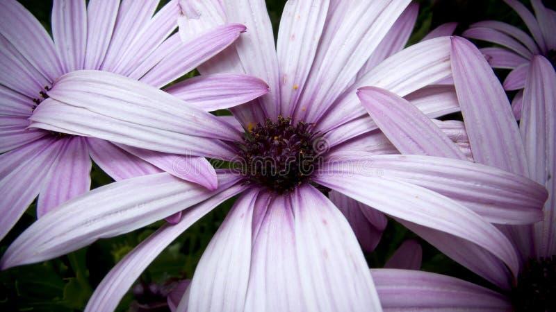 Fiore viola nella profondità del campo poco profonda immagini stock