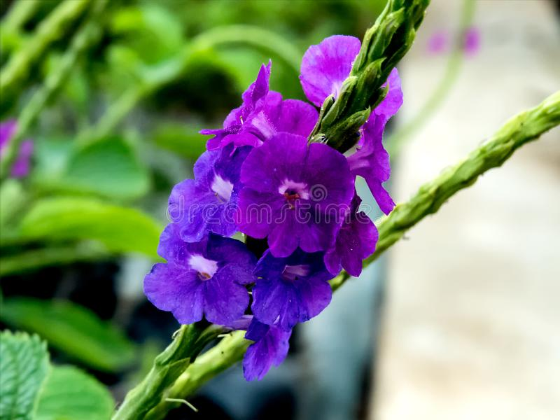 Fiore viola su priorità bassa verde fotografie stock libere da diritti