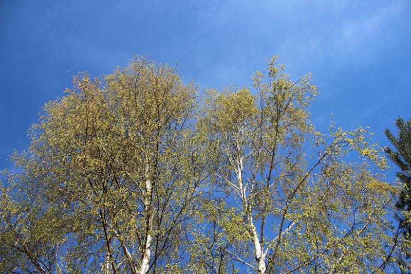 Fiorendo e giovani foglie variopinte in primavera Naturale puro fotografie stock