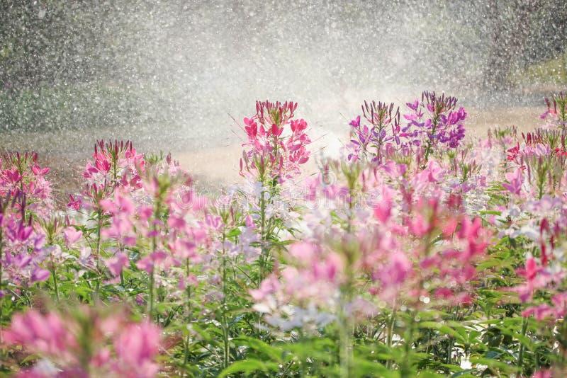 fiori ฺBeautiful fotografie stock
