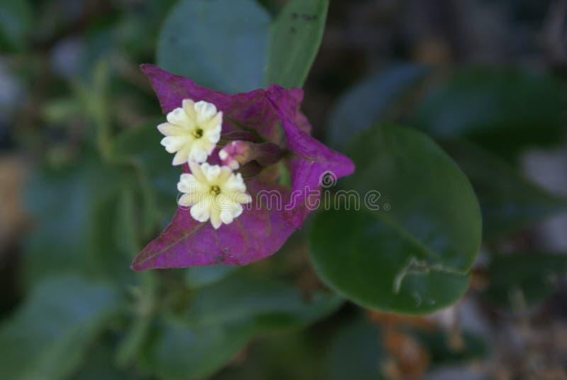 2 fiori in 1 immagini stock