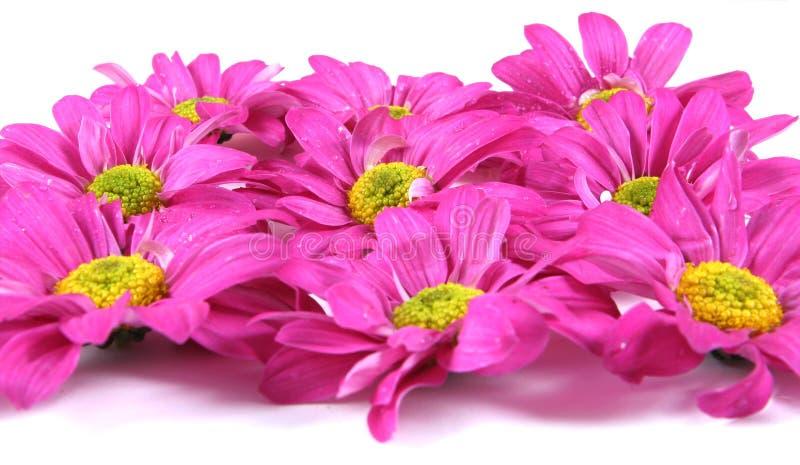 Fiori. immagine stock