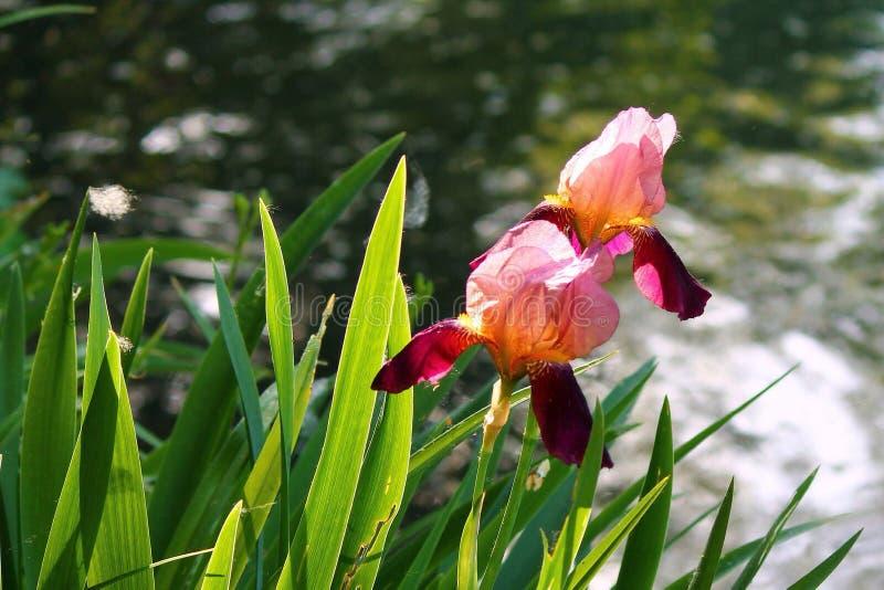 fiori royaltyfria foton
