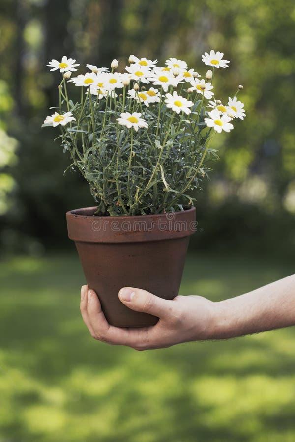 fiori immagini stock