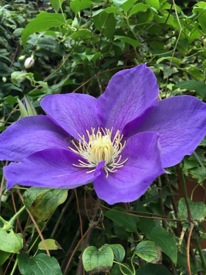 fiori adorabili dal giardino fotografie stock libere da diritti