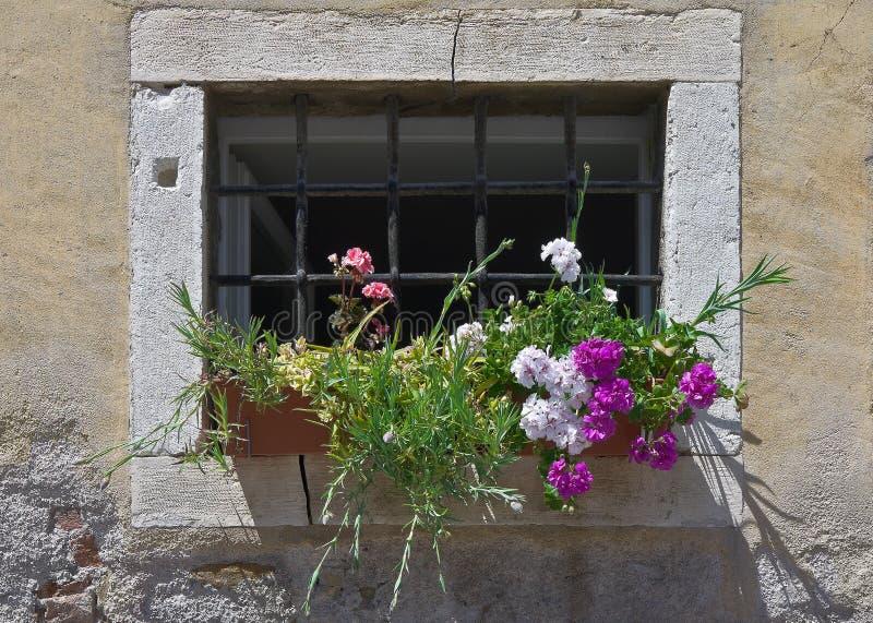 Fiori alla finestra con una grata fotografie stock libere for Finestra con fiori disegno