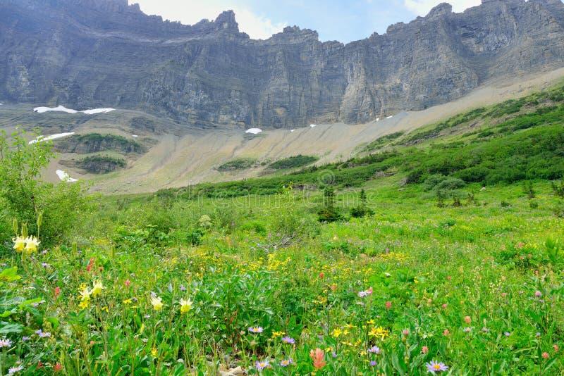Download Fiori Alpini Selvaggi Sul Paesaggio Del Glacier National Park Fotografia Stock - Immagine di accampamento, cielo: 55358048