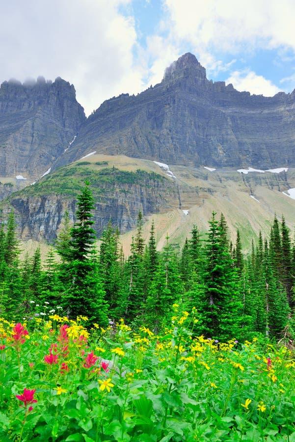 Download Fiori Alpini Selvaggi Sul Paesaggio Del Glacier National Park Immagine Stock - Immagine di accampamento, bello: 55358347