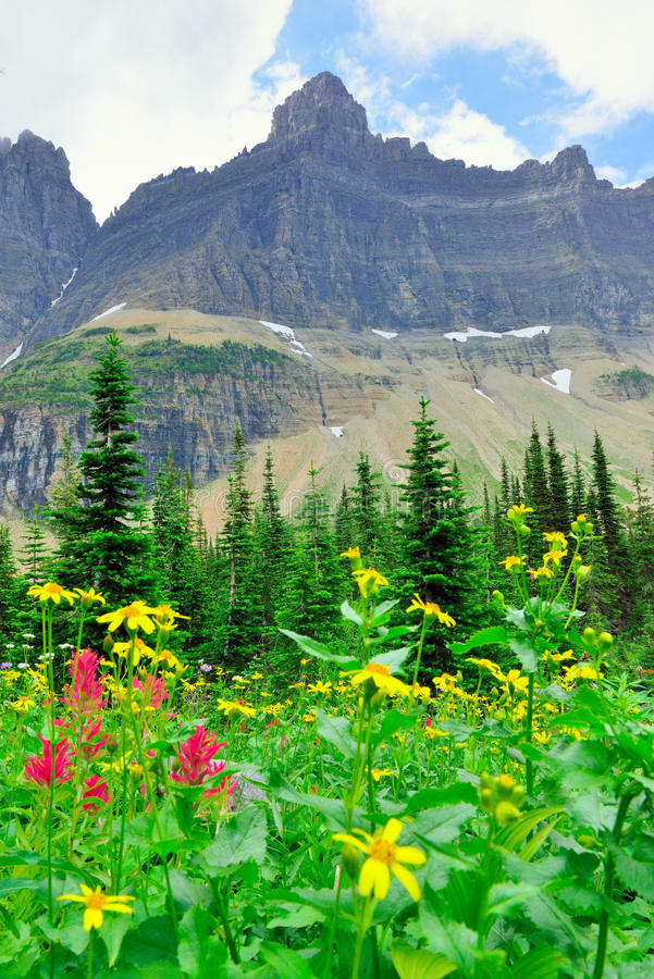 Download Fiori Alpini Selvaggi Sul Paesaggio Del Glacier National Park Fotografia Stock - Immagine di fagotto, paesaggio: 55358366