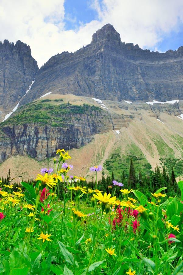 Download Fiori Alpini Selvaggi Sul Paesaggio Del Glacier National Park Immagine Stock - Immagine di parco, naturalizzato: 55358429