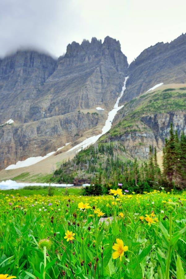 Download Fiori Alpini Selvaggi Sul Paesaggio Del Glacier National Park Fotografia Stock - Immagine di fiume, montagna: 55358490