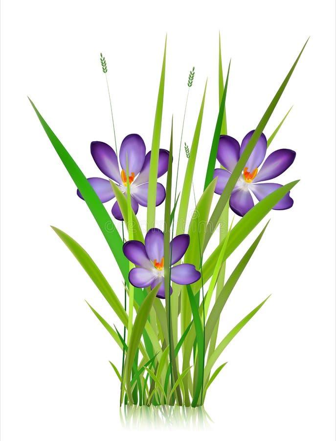 Fiori in anticipo della foresta e del giardino della molla isolati sull'insieme bianco di vettore Illustrazione della primavera e illustrazione vettoriale