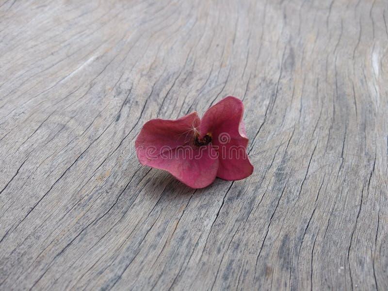 Fiori appassiti sul pavimento di legno immagine stock
