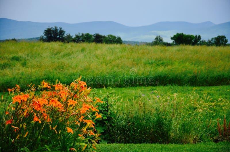 Fiori arancio nel Vermont i fotografia stock libera da diritti