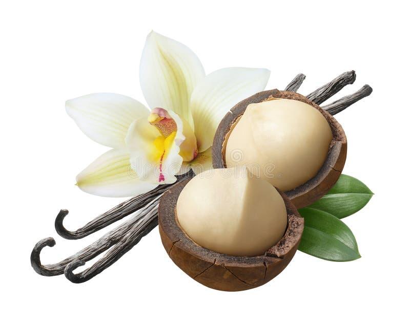 Fiori, baccelli e foglie della vaniglia con le noci di macadamia isolate su fondo bianco fotografia stock libera da diritti