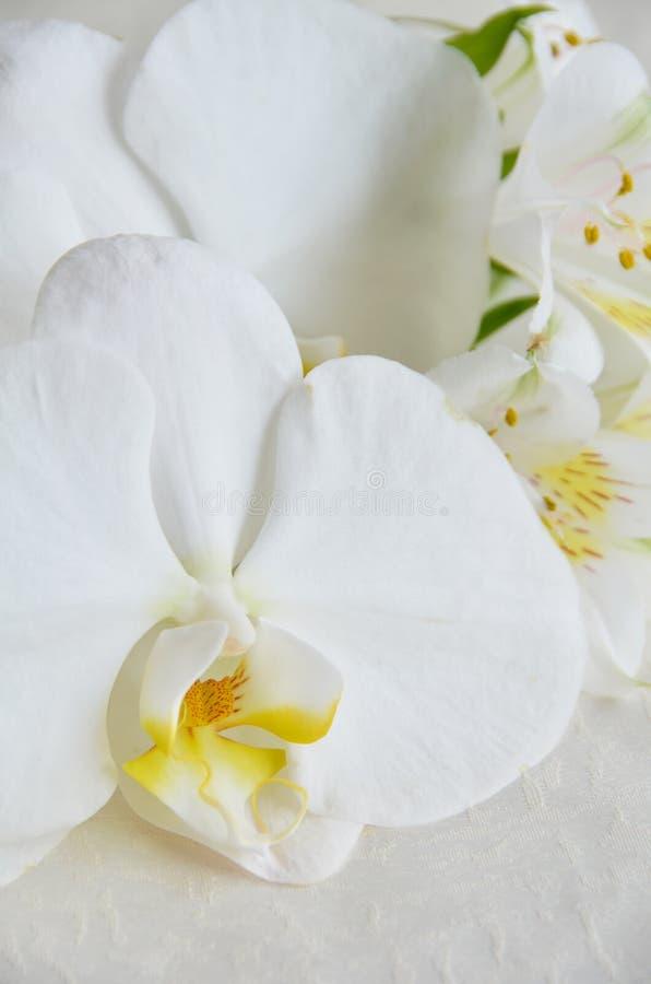 Fiori bianchi con l'orchidea fotografia stock