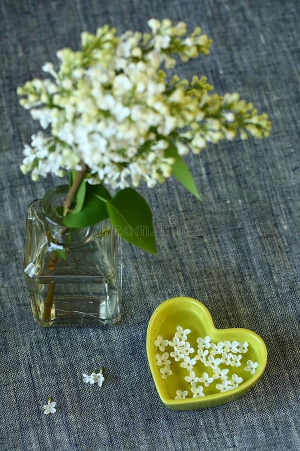 Fiori bianchi dei lillà immagine stock