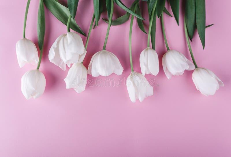 Fiori bianchi dei tulipani sopra fondo rosa-chiaro Cartolina d'auguri o invito di nozze fotografia stock