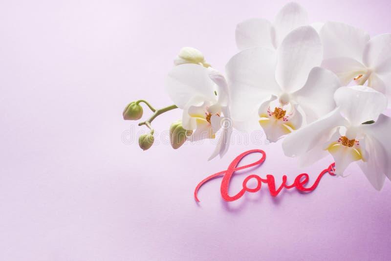 Fiori bianchi dell'orchidea su fondo rosa giorno del ` s del biglietto di S. Valentino di concetto fotografia stock libera da diritti