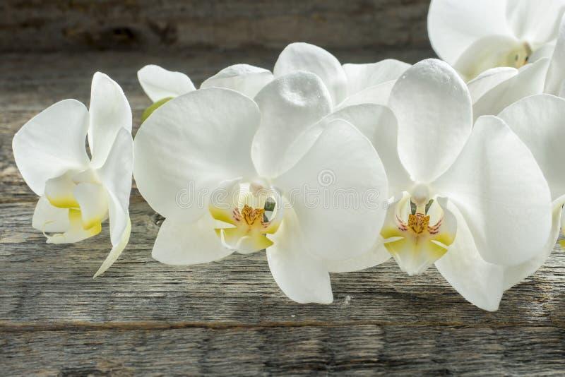 Fiori bianchi dell'orchidea su fondo rustico di legno fotografie stock