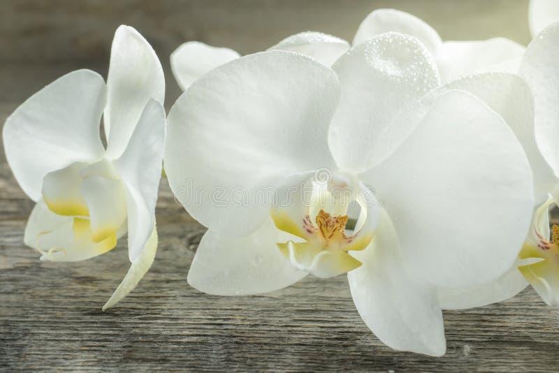Fiori bianchi dell'orchidea su fondo rustico di legno immagine stock