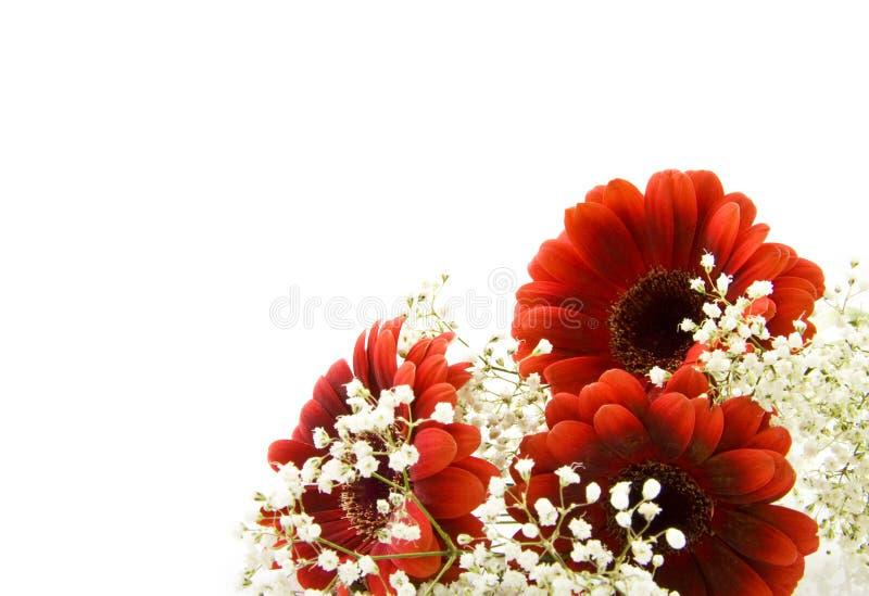 Fiori bianchi rossi fotografia stock