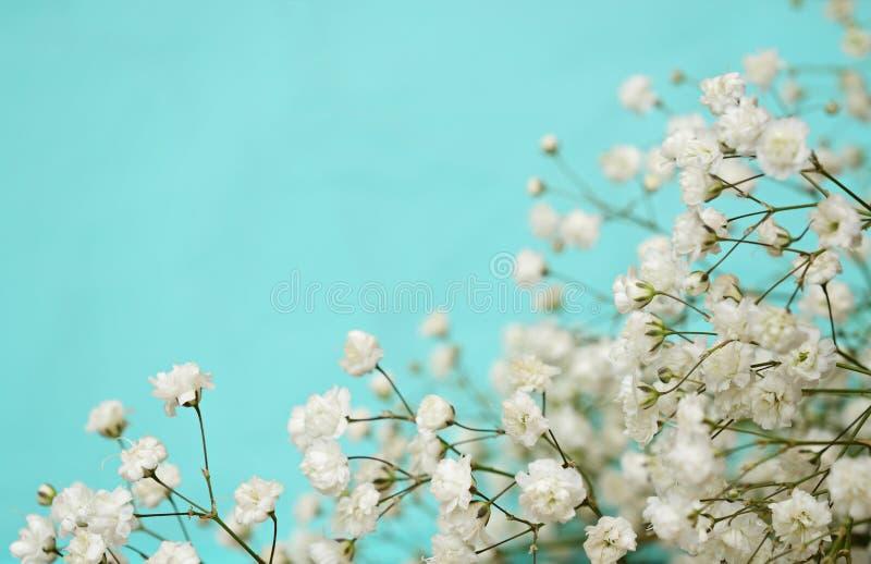 Fiori bianchi su fondo blu fotografia stock