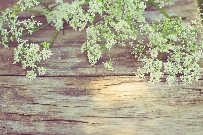 Fiori bianchi su fondo di legno d'annata fotografie stock libere da diritti