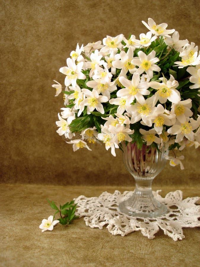 Fiori bianchi in vaso fotografia stock libera da diritti
