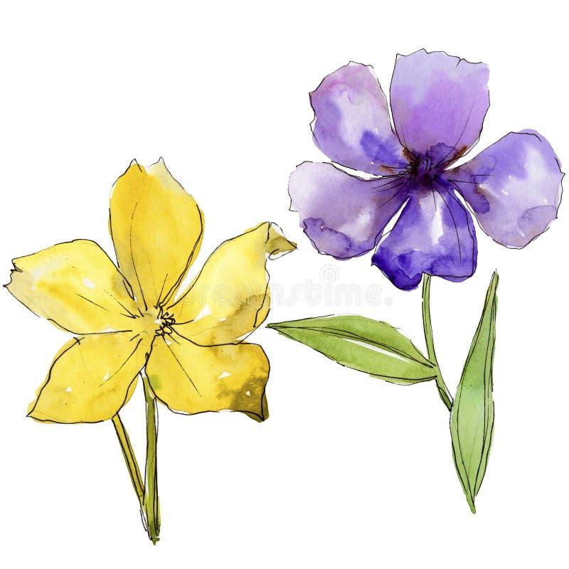 Fiori blu e porpora dell'acquerello del lino Fiore botanico floreale Elemento isolato dell'illustrazione illustrazione vettoriale