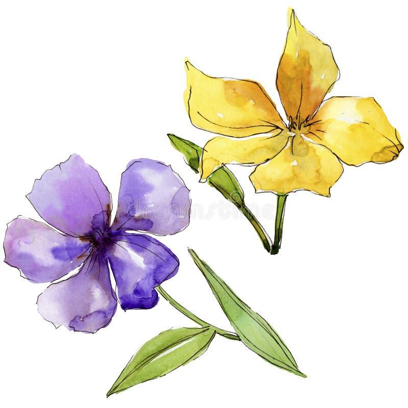 Fiori blu e porpora dell'acquerello del lino Fiore botanico floreale Elemento isolato dell'illustrazione illustrazione di stock