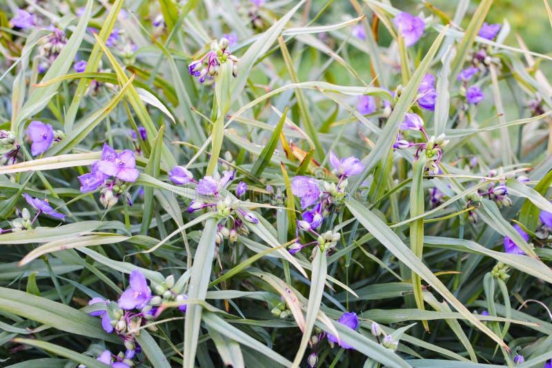 Fiori blu piacevoli su un'erba verde immagine stock