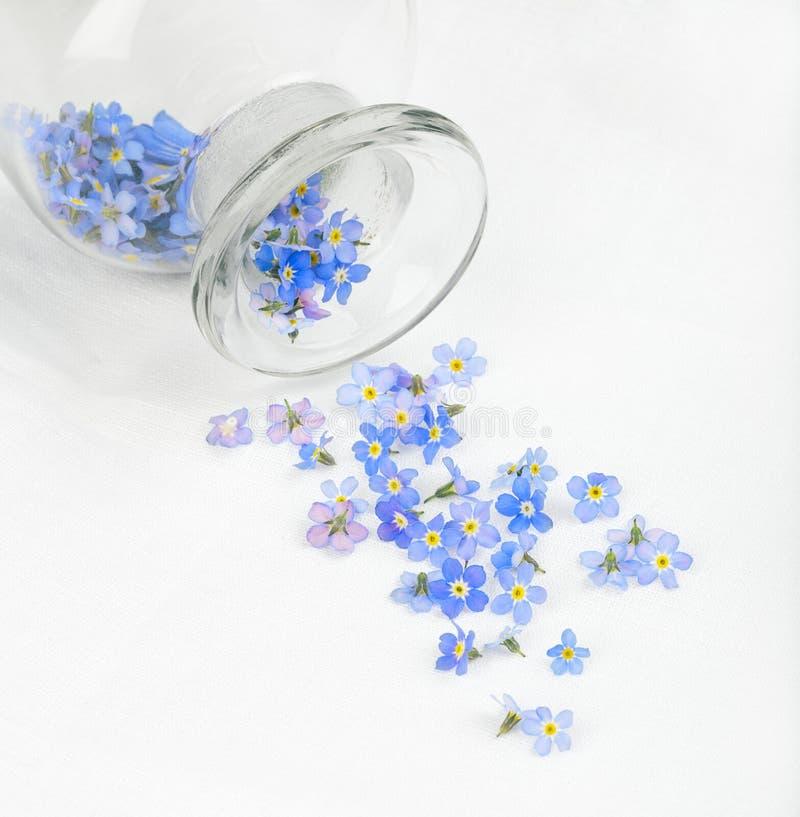 Fiori blu sparsi fotografia stock libera da diritti