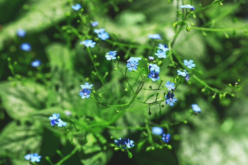Fiori blu vivi nello stile della sfuocatura per fondo floreale naturale fotografia stock libera da diritti