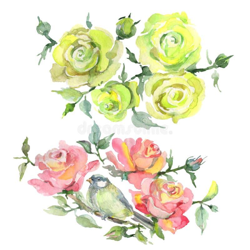 Fiori botanici floreali del mazzo di Rosa Insieme dell'illustrazione del fondo dell'acquerello Elemento isolato dell'illustrazion royalty illustrazione gratis