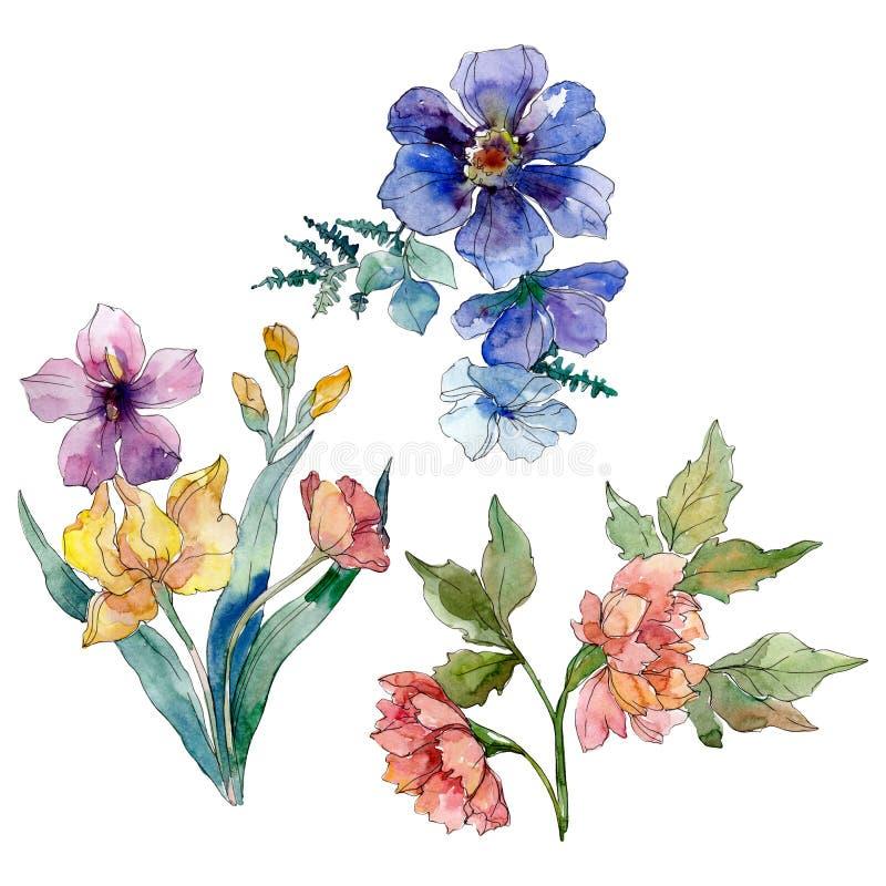 Fiori botanici floreali del mazzo del Wildflower Insieme della priorit? bassa dell'acquerello Elemento isolato dell'illustrazione illustrazione di stock