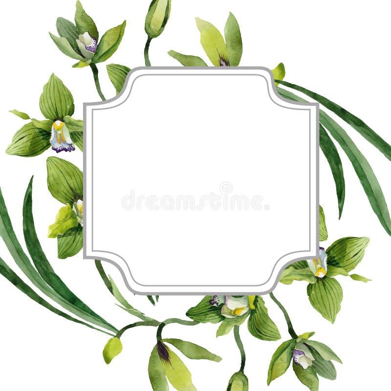 Fiori botanici floreali dell'orchidea verde Insieme dell'illustrazione del fondo dell'acquerello Quadrato dell'ornamento del conf fotografie stock libere da diritti
