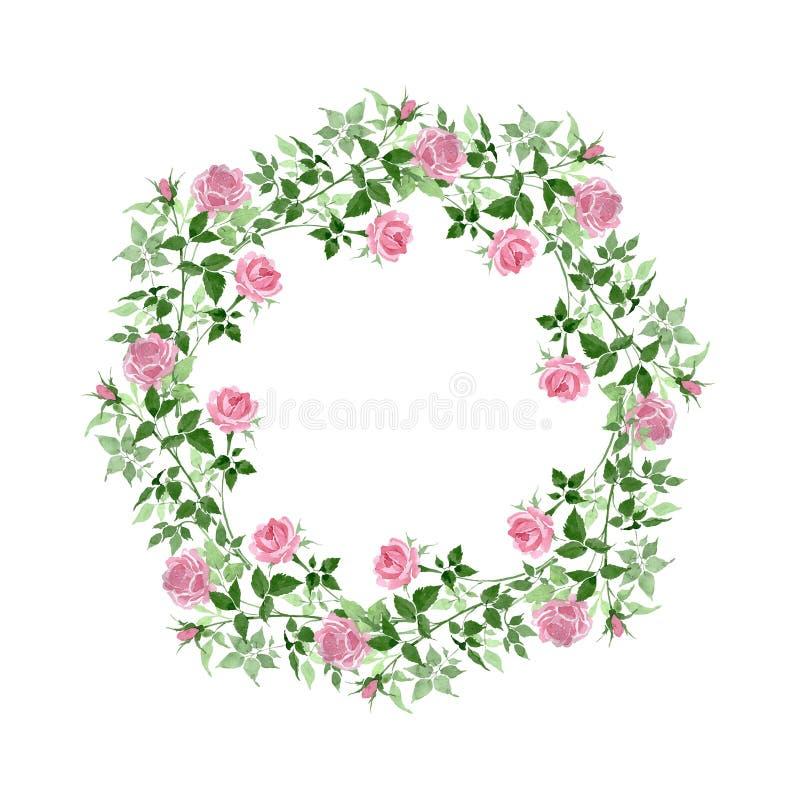 Fiori botanici floreali delle rose rosa del cespuglio Insieme dell'illustrazione del fondo dell'acquerello Quadrato dell'ornament illustrazione vettoriale