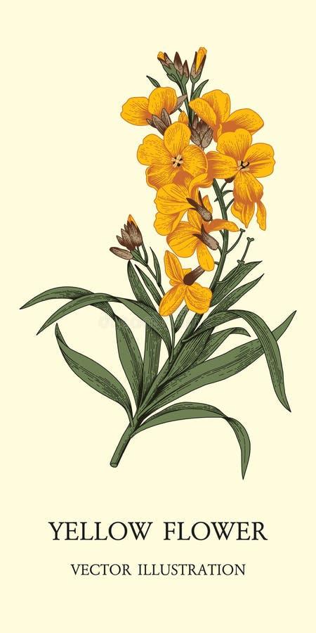 Fiori Cartolina dell'annata di vettore Modello di verdure Tema botanico illustrazione vettoriale