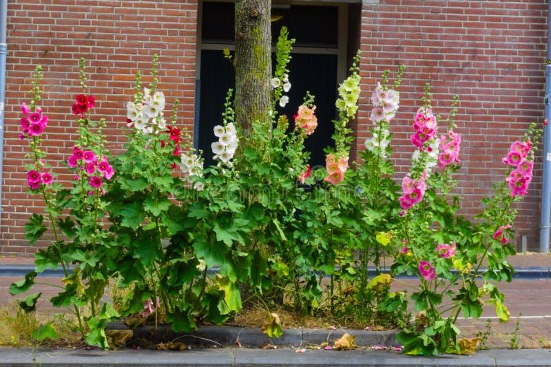 Fiori che fioriscono di estate fotografia stock libera da diritti