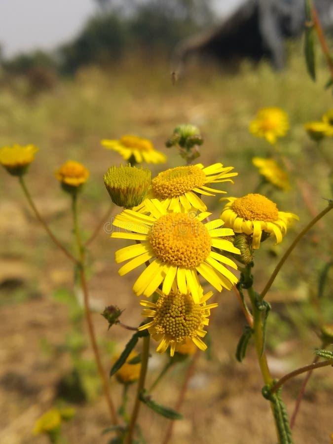 fiori colorati giallo fotografia stock libera da diritti