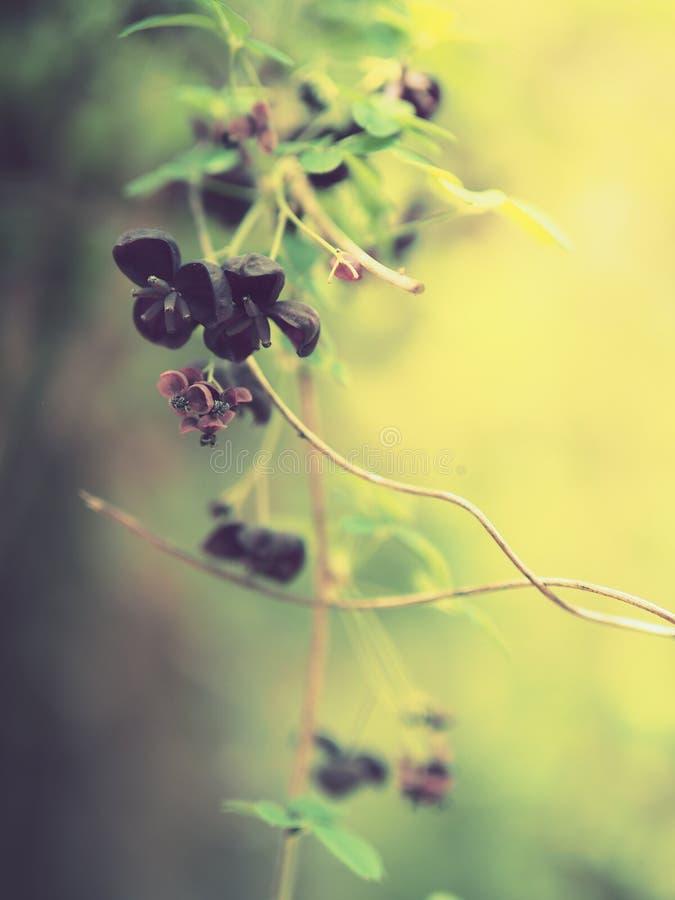 fiori colorati vino porpora e profondo Tre-petaled fotografie stock
