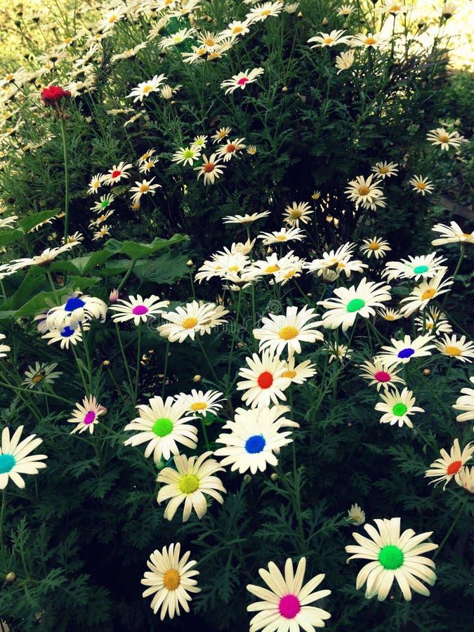 Fiori Colourful immagini stock libere da diritti