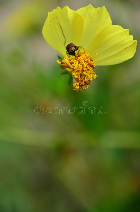 Fiori con gli insetti fotografia stock libera da diritti